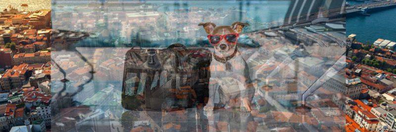 انتقال حیوانات به ترکیه